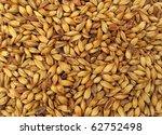 barley seeds full frame | Shutterstock . vector #62752498