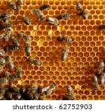 honey comb and a bee working   Shutterstock . vector #62752903