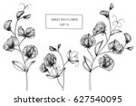 sweet pea flowers drawing and... | Shutterstock .eps vector #627540095