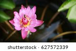 Pink Lotus Waterlily And Bee I...