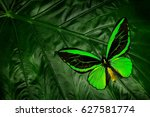 beautiful green and black... | Shutterstock . vector #627581774