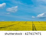field of flowers with blue sky... | Shutterstock . vector #627617471