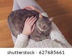 top view of a furry tabby cat...   Shutterstock . vector #627685661