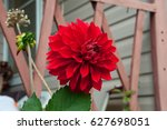 Bright Red Single Blossomed...