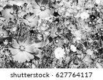motion  of black and white...   Shutterstock . vector #627764117