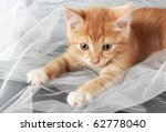 Stock photo cute little red kitten playing with fabric 62778040