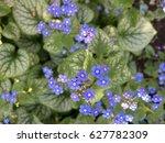 'jack frost' flower   Shutterstock . vector #627782309