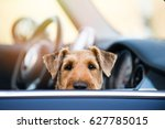 Dog At Car