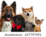 group of cats and dogs in front.... | Shutterstock . vector #627797591