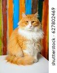 yellow persian cat | Shutterstock . vector #627802469