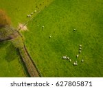 herd of sheep in green field...   Shutterstock . vector #627805871