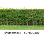 hedge fence or green leaves... | Shutterstock . vector #627830309