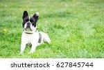 french bulldog | Shutterstock . vector #627845744