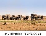 herd of african elephants... | Shutterstock . vector #627857711