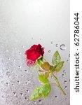 Beautiful Close Up Rose With...