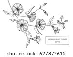 morning glory flowers drawing... | Shutterstock .eps vector #627872615