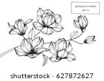 magnolia flowers drawing and... | Shutterstock .eps vector #627872627
