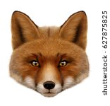 Red Fox Portrait . Isolated ...
