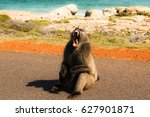 baboon on the road in south... | Shutterstock . vector #627901871