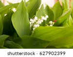 closeup of a lily of the valley ... | Shutterstock . vector #627902399