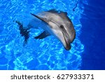 dolphin in the water | Shutterstock . vector #627933371