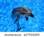 dolphin in the water   Shutterstock . vector #627933395