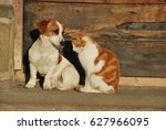 Stock photo cat and dog sitting outside the cottage 627966095