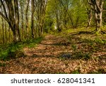 trail through the forest in springtime. walk in fine weather - stock photo