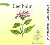 wild bergamot or bee balm ... | Shutterstock .eps vector #628053515