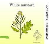 White Mustard  Sinapis Alba ....