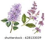 Watercolor Hand Painted Lilac....
