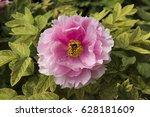 flower of china   Shutterstock . vector #628181609
