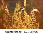 Stems Of Autumn Grass In...