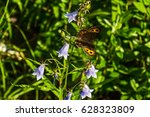 Small photo of Erebia neriene. Butterfly on a flower