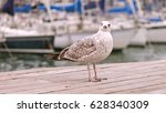 gull standing on the pier... | Shutterstock . vector #628340309