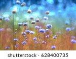 fluffy purple wild meadow wild... | Shutterstock . vector #628400735