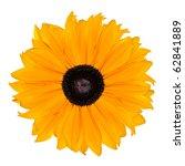 Yellow Rudbeckia Flower...