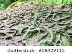 tree roots underground