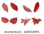 Fresh Red Leaf On A White...