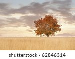 Lonely tree in a field in autumn - stock photo