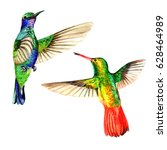 sky bird colibri in a wildlife... | Shutterstock . vector #628464989