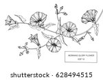 morning glory flowers drawing... | Shutterstock .eps vector #628494515