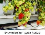 tasty sweet organic pink... | Shutterstock . vector #628576529