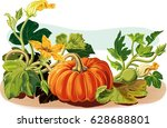 pumpkin plant  with some... | Shutterstock .eps vector #628688801