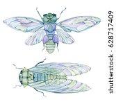 watercolor cicada. watercolor... | Shutterstock . vector #628717409