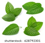 fresh mint collection isolated... | Shutterstock . vector #628792301