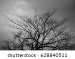 Silhouette Of Branch Tree...