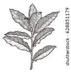 bay leaves illustration