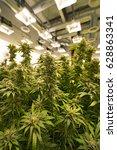 legal recreational marijuana... | Shutterstock . vector #628863341