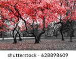 Red Flower Trees Blossom In A...